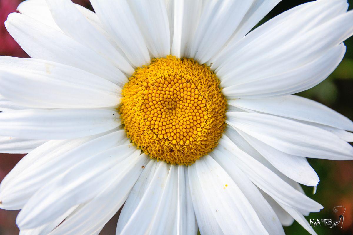 Dites le avec des fleurs !!! EOS_60D_5682_LR001