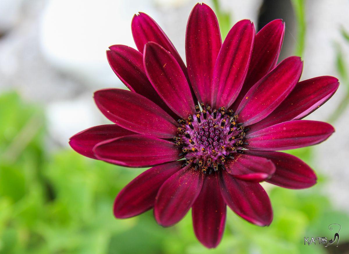 Dites le avec des fleurs !!! EOS_60D_6030_LR004