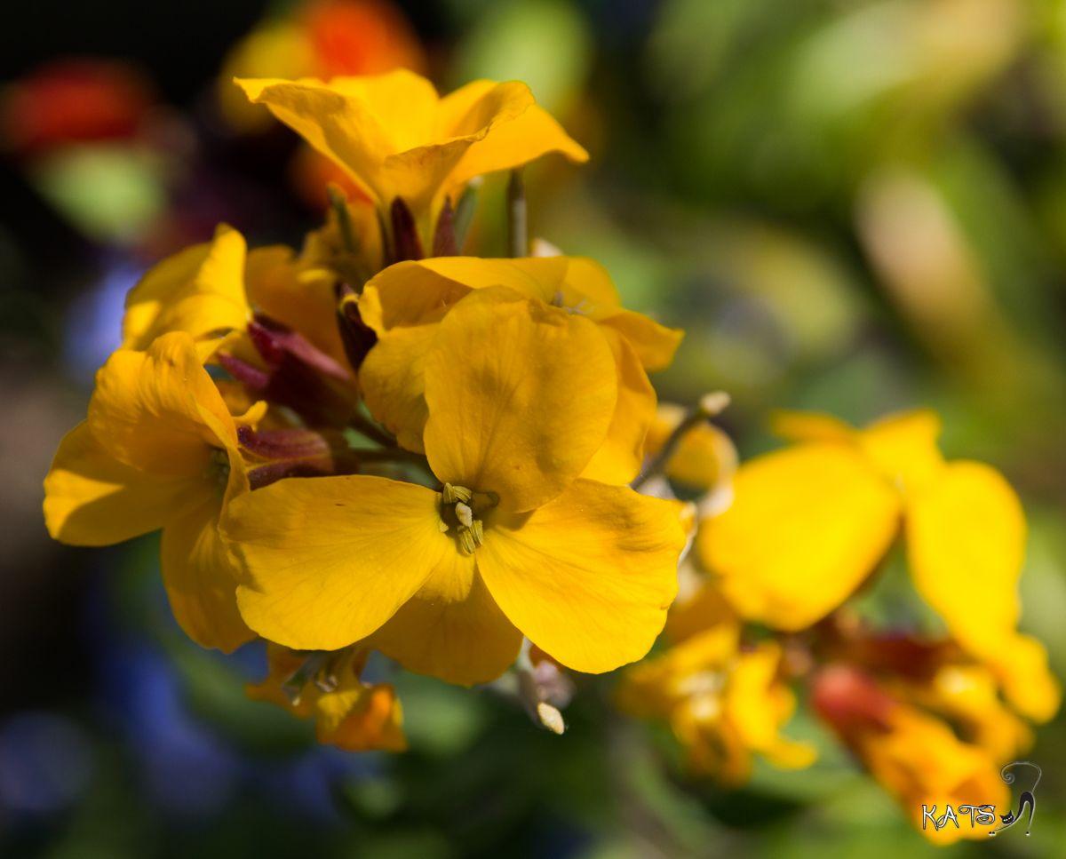 Dites le avec des fleurs !!! EOS_60D_6672_LR008