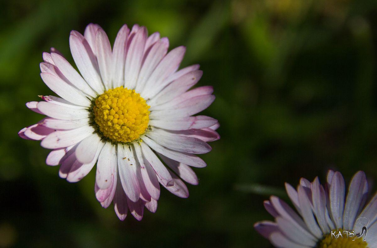 Dites le avec des fleurs !!! EOS_60D_6679_LR009